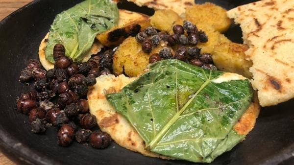 Kiến đã được ăn ở vùng Santander hơn 1.000 năm nay và có một ý nghĩa đặc biệt đối với người dân địa phương. Nguồn ảnh: BBC.