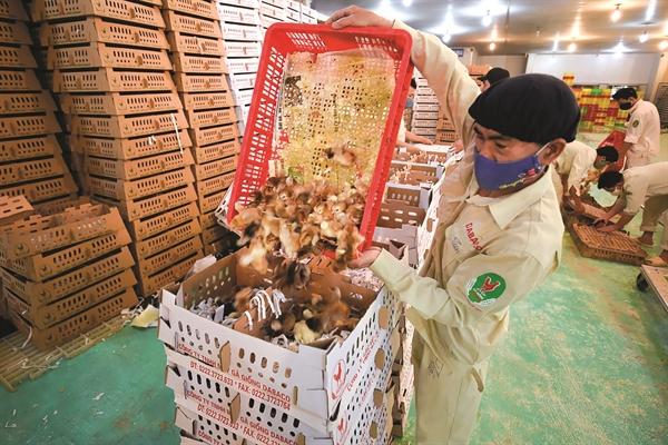 Thức ăn chăn nuôi và trứng gà cũng đang mang lại doanh thu lớn cho Dabaco.