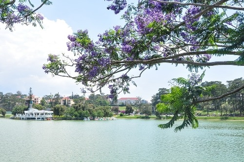 Xuan Huong Lake is located in the city center and considered as the heart of Da Lat. The lake is surrounded by lush gardens that are filled with flowers and indigenous plants.