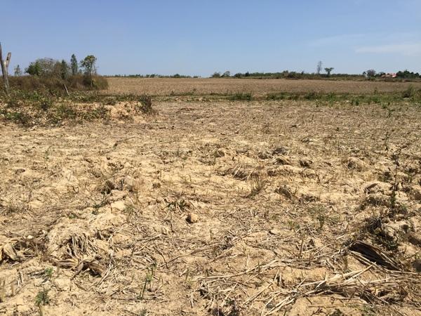 Thời tiết khắc nghiệt làm trầm trọng thêm tác động của thoái hóa đất và sa mạc hóa.  Nguồn ảnh: AP.