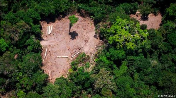 Brazil là nơi có đa dạng sinh học lớn nhất trên thế giới, với ước tính khoảng 50.000 loài thực vật - nhiều loài trong số đó đang đối mặt với nguy cơ tuyệt chủng do nạn phá rừng. Ảnh: DW.