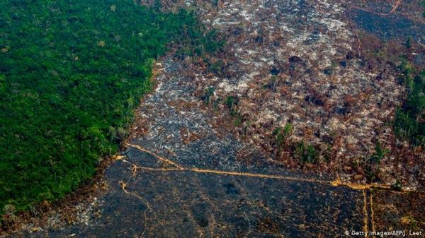 Khai phá đất làm nông nghiệp và nạn phá rừng là nguyên nhân chính dẫn đến mất các loài thực vật và nấm. Ảnh: DW.