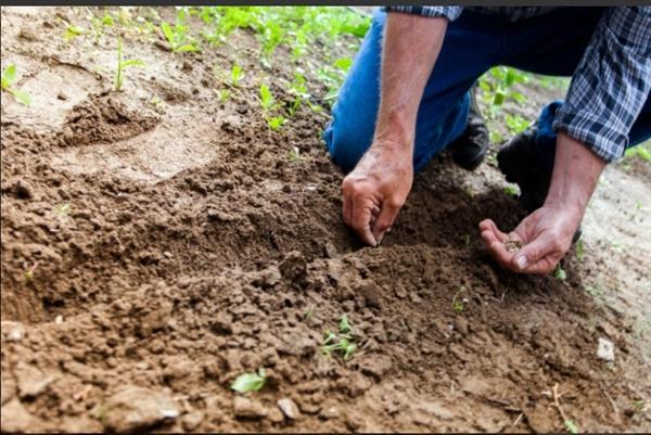 Đã đến lúc ngừng xử lý đất như bụi bẩn. Ảnh: Regeneration International.
