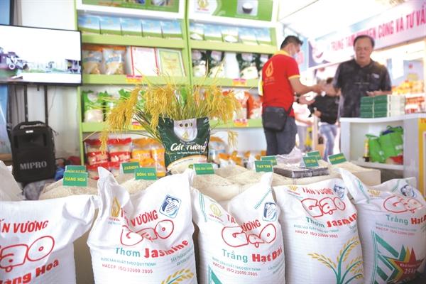 Việt Nam đang tái cơ cấu ngành hàng lúa gạo theo hướng ưu tiên đầu tư một số loại giống để nâng cao giá trị hạt gạo, phù hợp với nhu cầu thị trường.