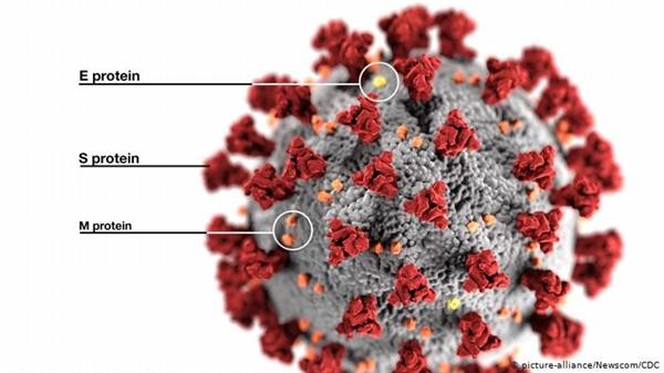 Các đột biến thường xảy ra trong các protein bề mặt của virus. Ảnh: Deutsche Welle.