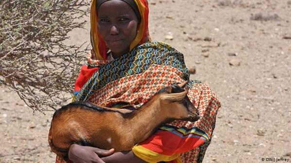 Một người chăn gia súc người Somali-Ethiopia vào năm 2016. Cô ấy nằm trong số nhiều người đã phải chịu đựng chuyến phiêu lưu kéo dài 6 tháng để tìm mưa và đồng cỏ do hạn hán. Ảnh: Deutsche Welle.