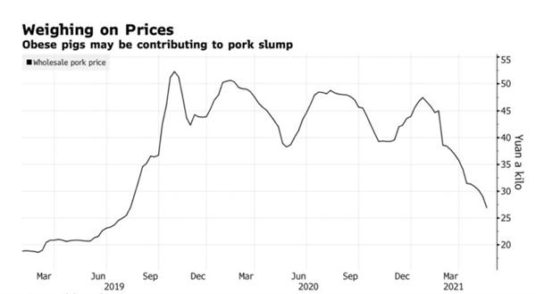 Cân nhắc về giá cả: Lợn béo phì có thể góp phần làm cho giá thịt lợn tại Trung Quốc sụt giảm. Ảnh: Bộ Thương mại Trung Quốc.