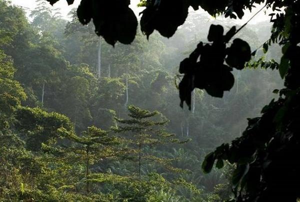 Khu rừng nhiệt đới ở Công viên Quốc gia Kakum, Ghana. Ảnh: AP.