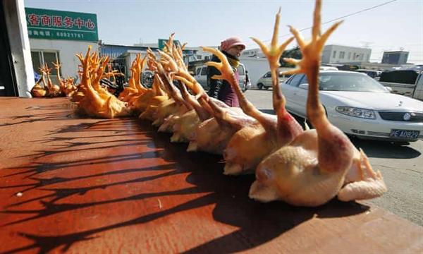 Xác gà tại một chợ gia cầm bán buôn ở Thượng Hải. Nhiều chủng cúm gia cầm hiện diện ở Trung Quốc và một số lây nhiễm không thường xuyên ở người. Ảnh: AP.
