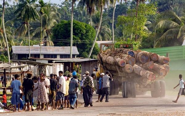 Một chiếc xe tải chở gỗ chạy qua làng Vanimo, Papua New Guinea, trên đường đến trại khai thác lâm sản Vanimo, nơi các khúc gỗ sẽ được chất lên tàu để xuất khẩu sang Trung Quốc. Ảnh: Tribune News Service.