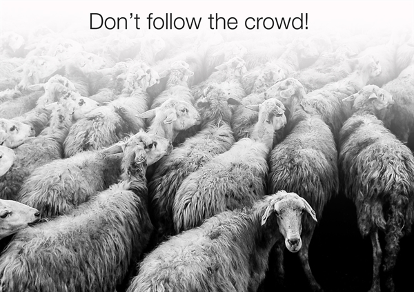 Tâm lý bầy đàn có thể gây hại cho triển vọng giao dịch của bạn. Ảnh minh họa: TheOnsetGroup.