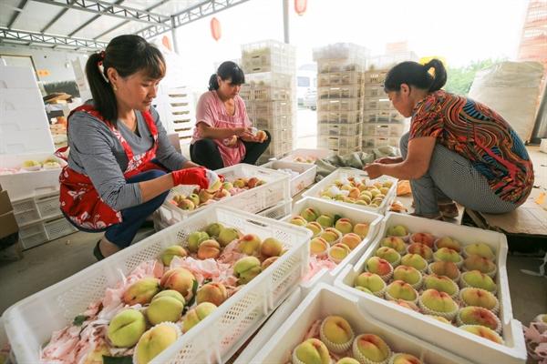 Nông dân Trung Quốc xếp đào vào hộp để bán ở Liên Vân Cảng, tỉnh Giang Tô, Trung Quốc. Ảnh: AFP.