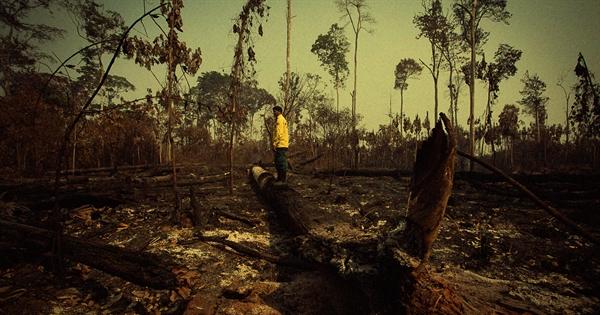 Nạn đốt, phá rừng ngày càng tăng và hạn hán nghiêm trọng làm rừng Amazon bị ảnh hưởng ngày càng tồi tệ hơn. Ảnh: Futurism.